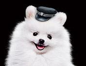 ソフトバンクのCMの白い可愛い犬の名前は「ギガちゃん」